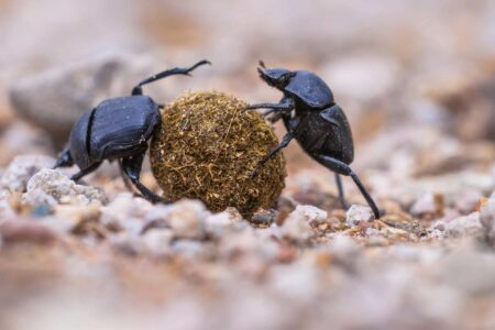 cx problems and solutions demonstrated by dung beetle